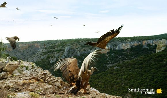 Preview thumbnail for video'Griffon Vultures Depend on the Sun to Fly. Why?