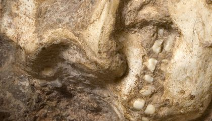 Top 7 Human Evolution Discoveries From South Africa