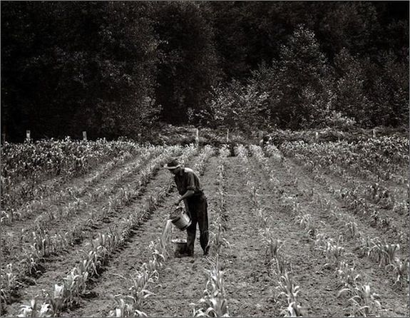 A Midwest field circa 1936