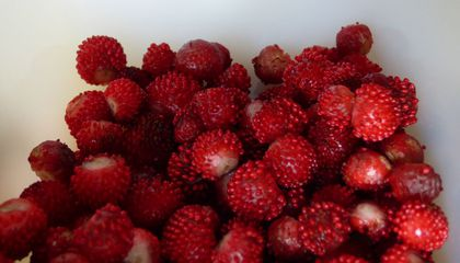 Fraises Des Bois, the Best Strawberry You've Never Had