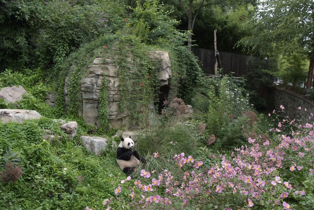 The Smithsonian National Zoological Park's giant panda habitat has many green features, including a solar hot water system and planted, green roofs.