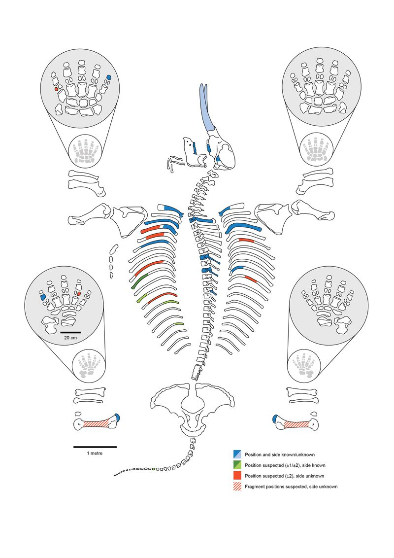Search Everything Smithsonian Learning Lab Ballerina Moves Diagram Printable Wiring Schematic Harness Mastodon Skeleton Showing Which Bones And Teeth Of The Animal Were Found At Site Dan Fisher Adam Rountrey University Michigan
