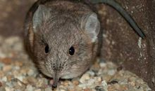 A New Shrew at the Zoo