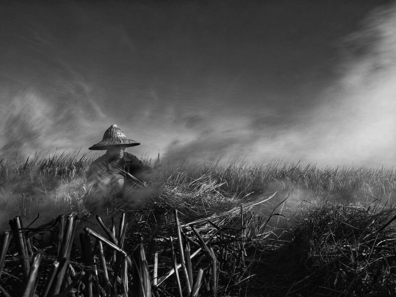 Vietnamese man burning off the rice during the rice harvest in Central Vietnam.