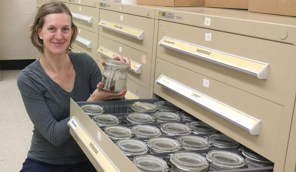 At the Smithsonian's National Museum of Natural History, curator of arachnids and myriapods Hannah Wood has examined and analyzed hundreds of pelican spiders, from the museum's collection and in other locations.
