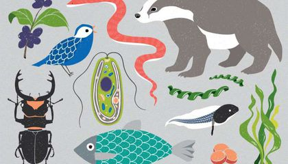Ambitious Project to Sequence Genomes of 1.5 Million Species Kicks Off