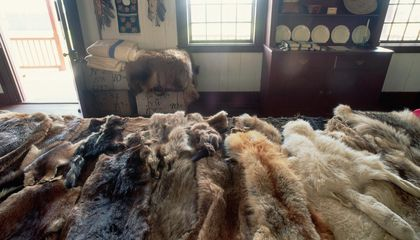 The 18th Century Fur Trade Polluted Lake Superior's Shore With Mercury That's Never Gone Away