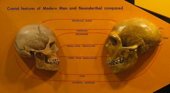 These two skulls are having a moment – but how often did they get together in real life?