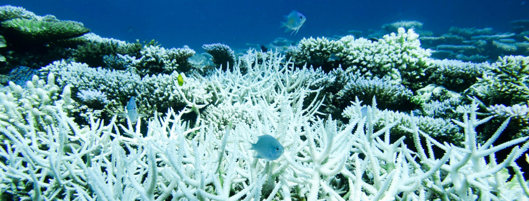 A coral reef bleached white.