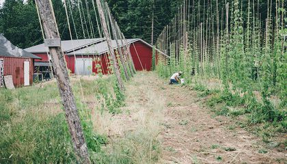 From Farm to Bottle: Sip Brews Among the Hop Bines at This Vancouver-Area Beer Farm
