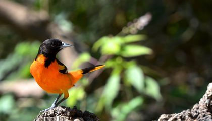 Scientists Can Predict When Birds Will Migrate Up to a Week