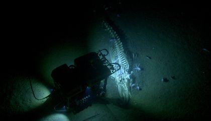 Watch Marine Life Feast on a Complete Whale Skeleton on the Ocean Floor