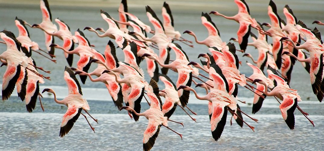 Flamingos at Ngorongoro Crater