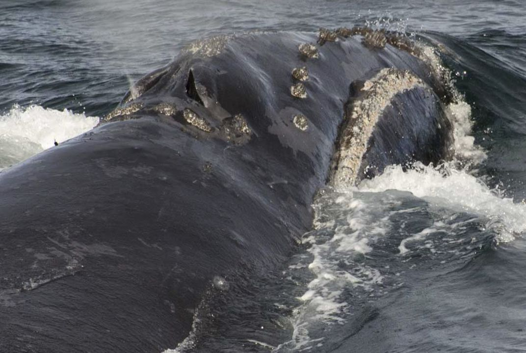 Scientists spot rare whale in Bering Sea