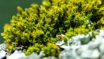 Step Into the Mossy World Where Tiny Plants Play an Outsized Role in the Environment