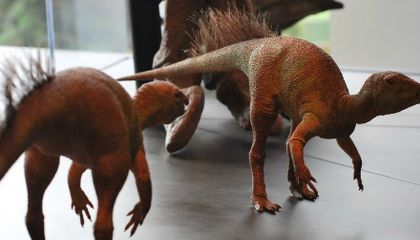Fruitadens and the Dinosaur Diet