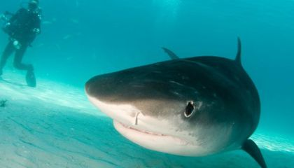 A Turn in the Tide for Sharks and Their Public Image