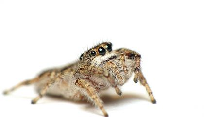 This Pesticide Doesn't Kill Spiders, But It Does Mess With Their Heads