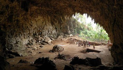 A New Genetic Study Suggests Modern Flores Island Pygmies and Ancient Hobbits Are Unrelated