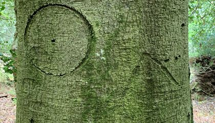 Virtually Explore a Forest Filled With Witches' Marks and Other Tree Etchings