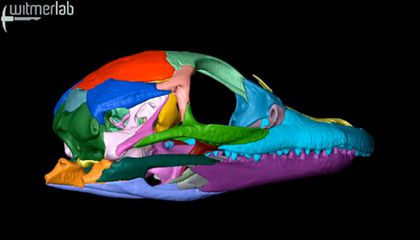Blog Carnival #31: Ancient Earth, World's Oldest ToothAche, Pot-Bellied Dinos and More
