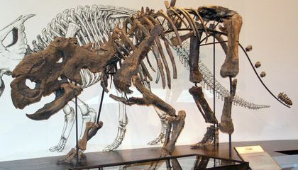 Chilled-Out Dinosaurs in the Alaskan Tundra
