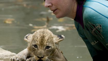 Zoo's Lion Cubs Pass Swim Test