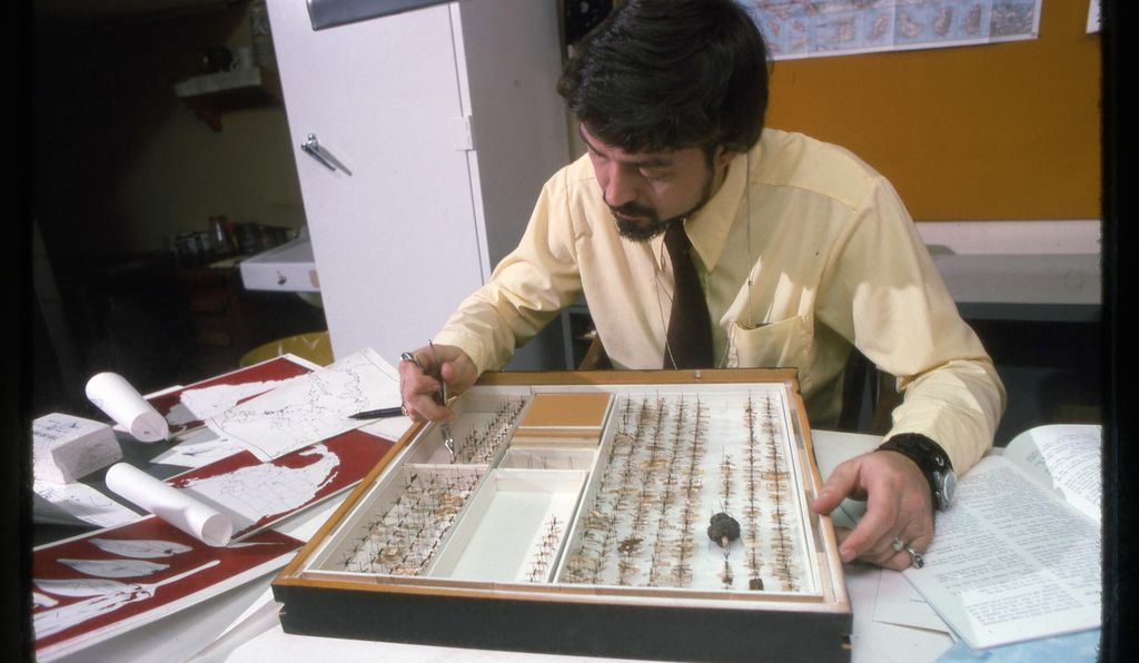 Smithsonian entomology curator W. Donald Duckworth studies a tray of moth specimens in 1975. Taxonomists have traditionally relied on physical characteristics to tease apart species.