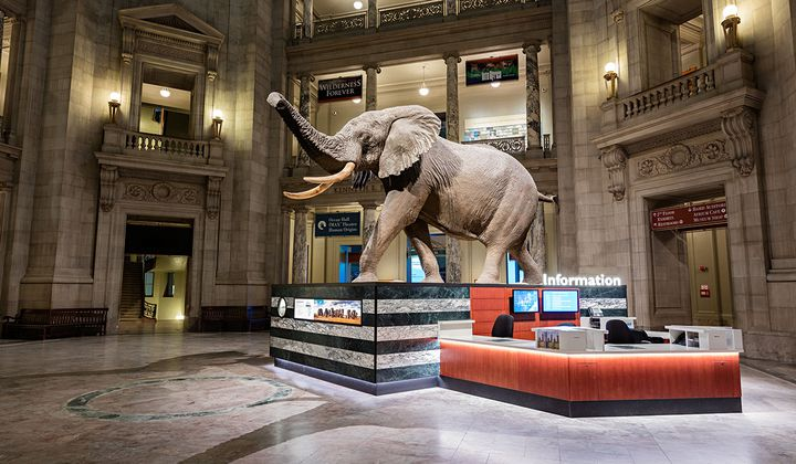 This African Bush Elephant is just the first of many photogenic sites for visitors at the Smithsonian's National Museum of Natural History. (James Di Loreto, Smithsonian Institution)