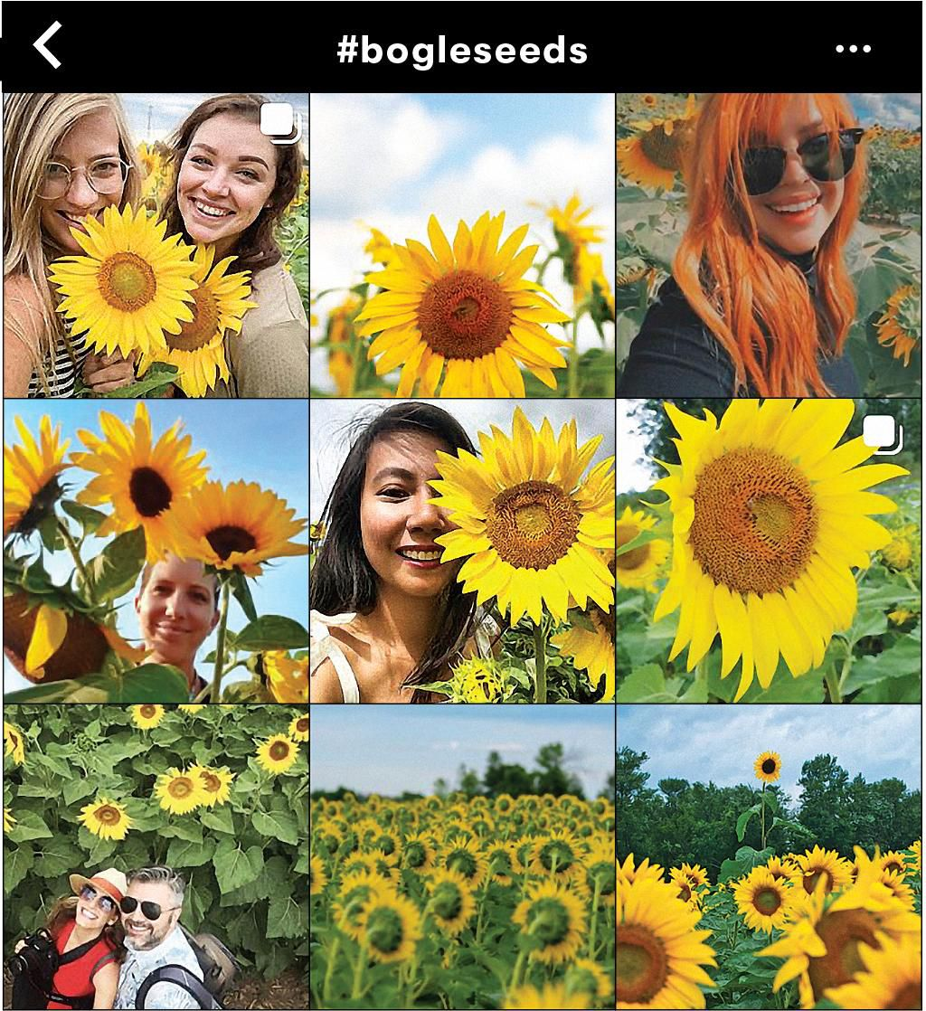 Instagram grid screenshot of people at sunflower farm