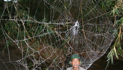 Gargantuan Spider Webs Bridge Waters of Madagascar