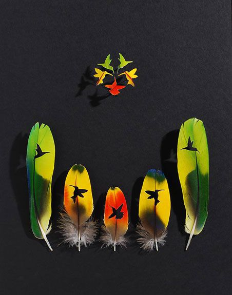Amazon parrot and macaw feathers
