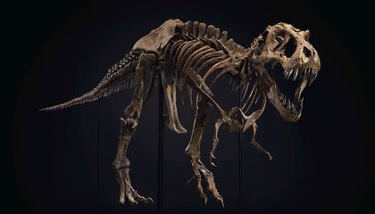 You Can Buy This T. Rex Skeleton—for a Hefty Price
