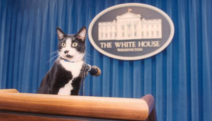The First Pet Position in the Trump White House Will Remain Open—for Meow