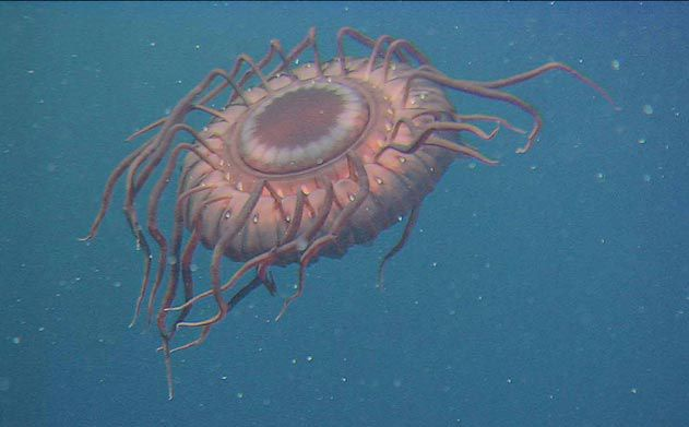 Deep-sea Jellyfish