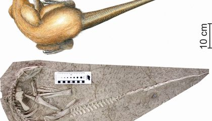 New Species of Burrowing Dinosaur May Have Died During 'Cretaceous Pompeii'