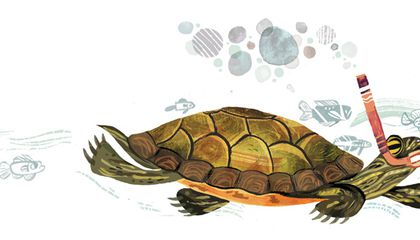 How Long Can Turtles Stay Underwater and Other Questions From Our Readers