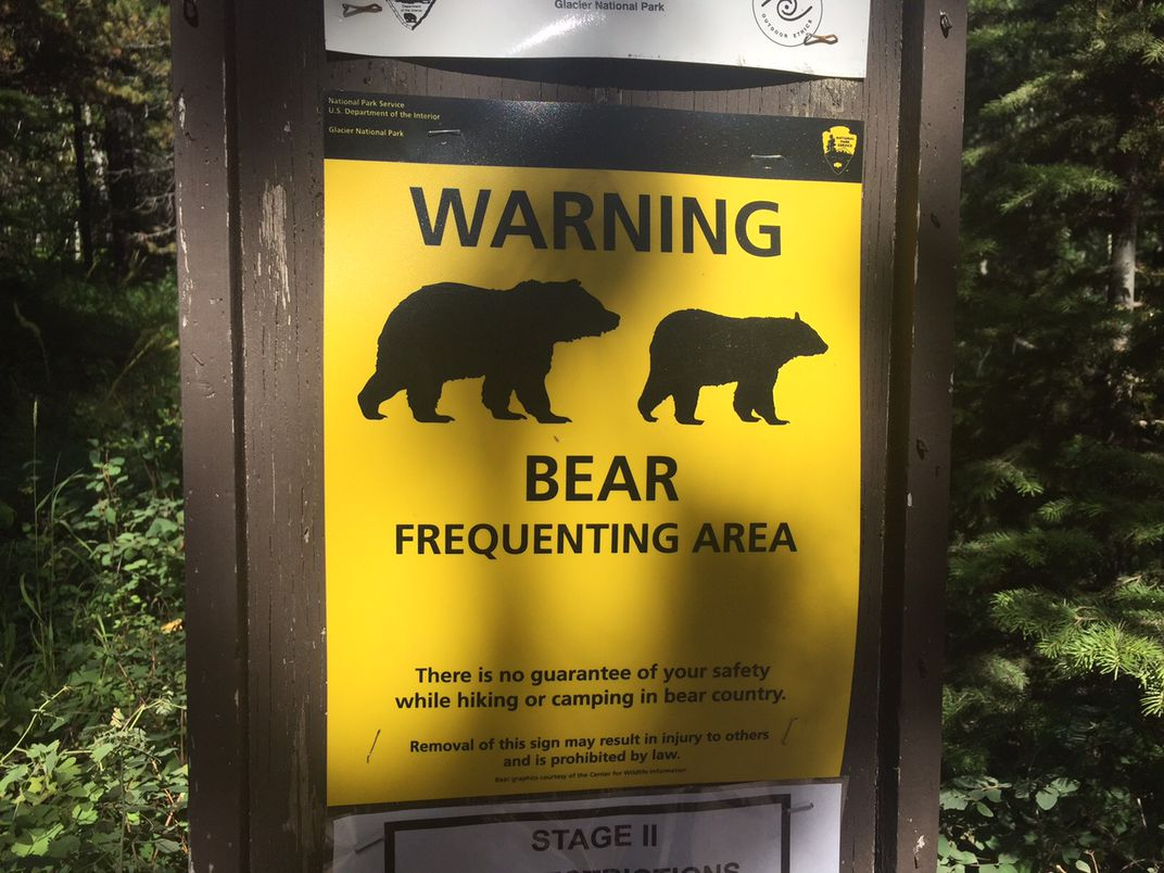 The Deadly Grizzly Bear Attacks That Changed the National