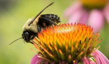Toxic Pesticides Are Driving Insect 'Apocalypse' in the U.S., Study Warns