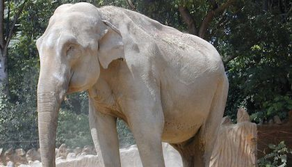 Video: This Elephant Learned to Speak Korean