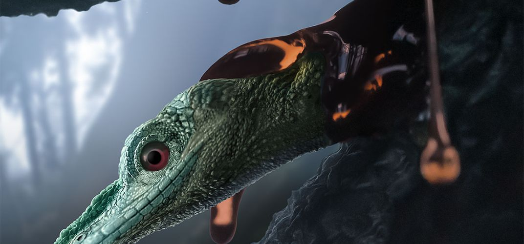 Caption: World's 'Smallest Dinosaur' Was a Mystery Reptile