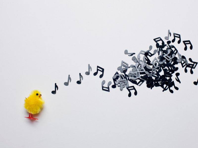 Musical Chicken