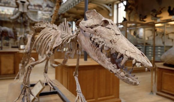 Preview thumbnail for video'Why This Whale Ancestor Is an Evolutionary Surprise