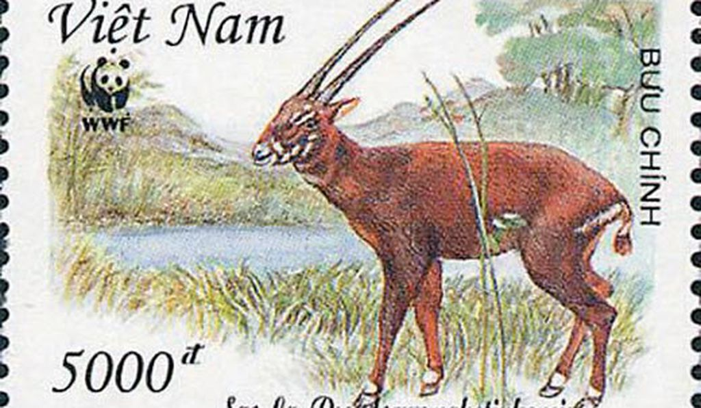 No one knows how many saola are left.