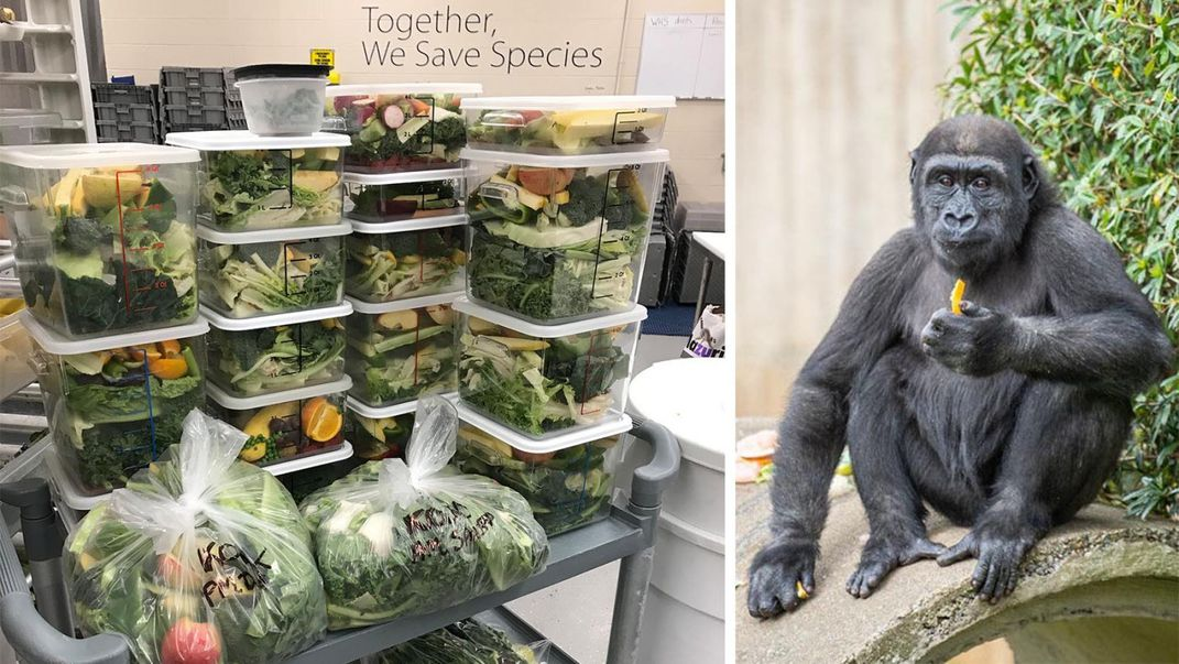 Stacked bins filled with fruits and vegetables (left) and a young western lowland gorilla seated on a rock eating a snack (right)