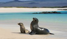 Galápagos Islands Voyage: A Family Journey description