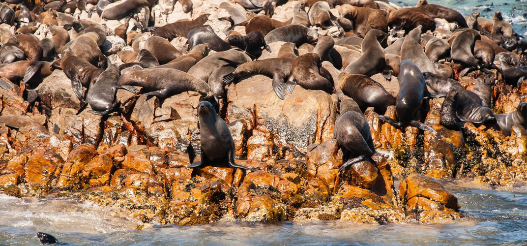 Seals sunbathing in Mossel Bay