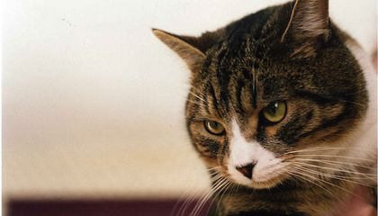 Does This Cat Know When You're Going to Die?