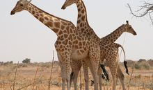 Thirty-Three Migratory Species Get New Protections