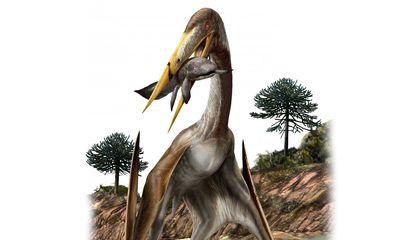 Unique Bone Structure Helped Long-Necked Pterosaurs Fly